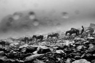 Hampta Pass Trek- The mules carrying luggages of Trekkers